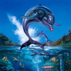 Дельфин Экко